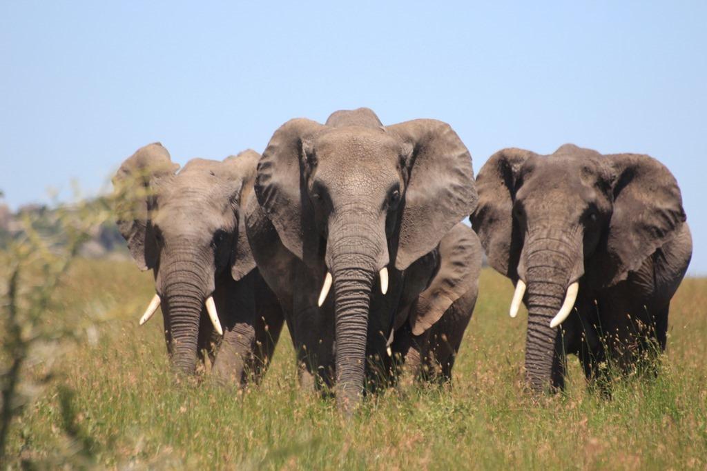 Serengeti 046