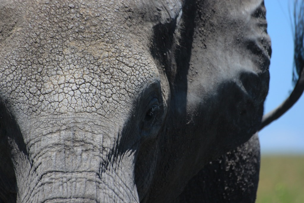Serengeti 047