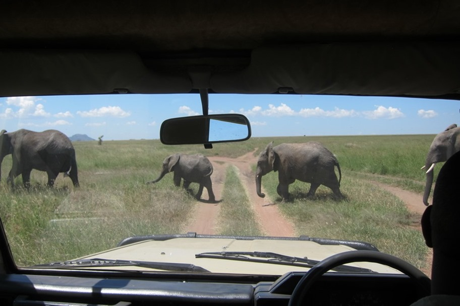 Serengeti 048