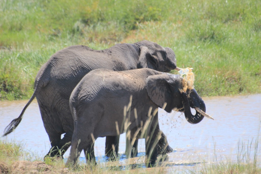 Serengeti 049