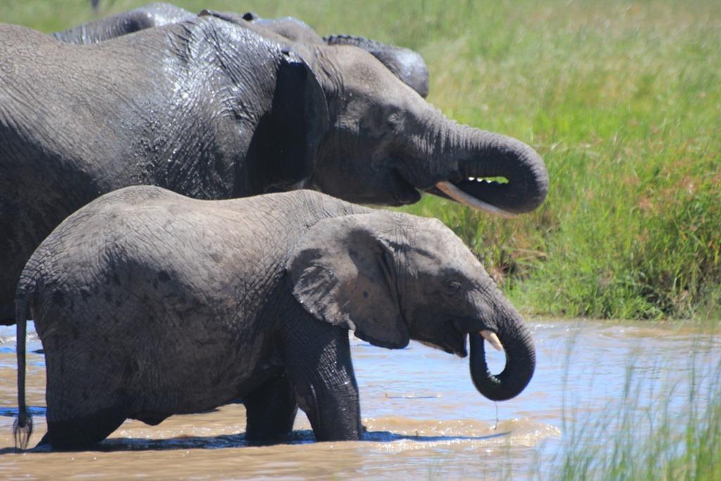Serengeti 050