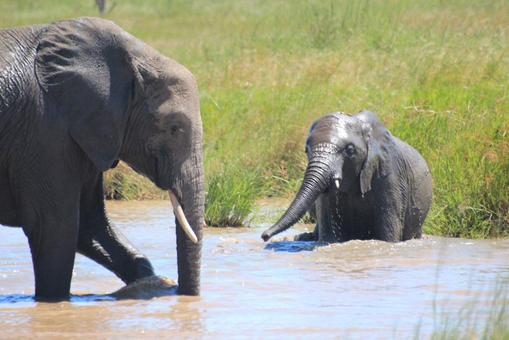 Serengeti 051
