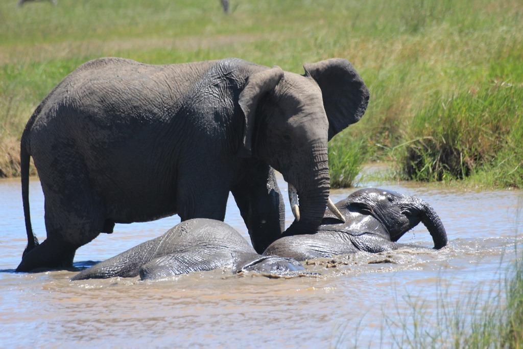 Serengeti 052