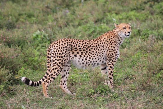 Ngorongo Park Day 1 015