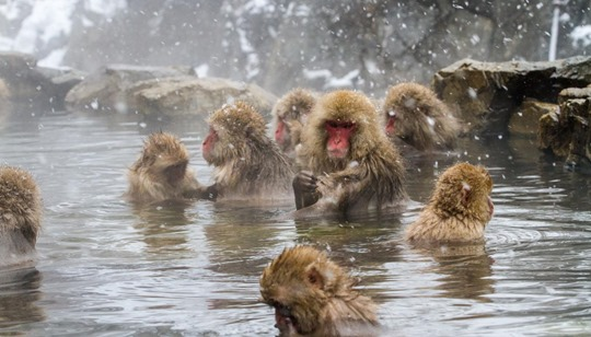 Snow Monkeys y'all!